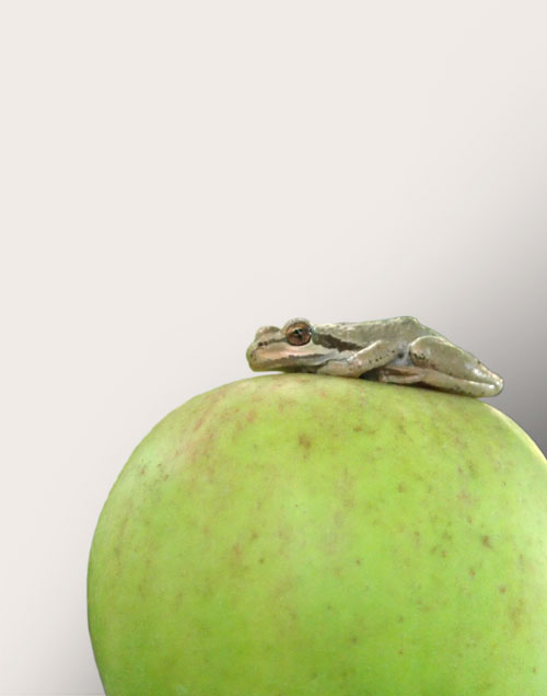 Frog on apple selection