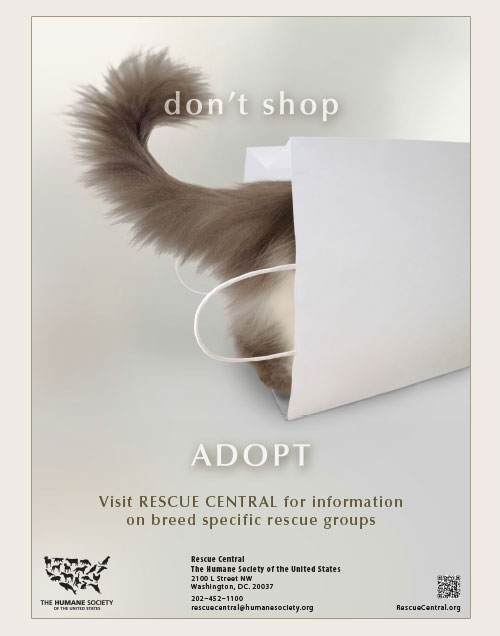 Don't shop, adopt poster with image of cat in a bag